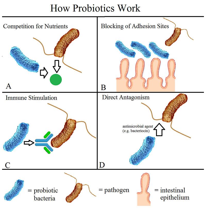 Nor probiotics work Kintner Chiropreactic