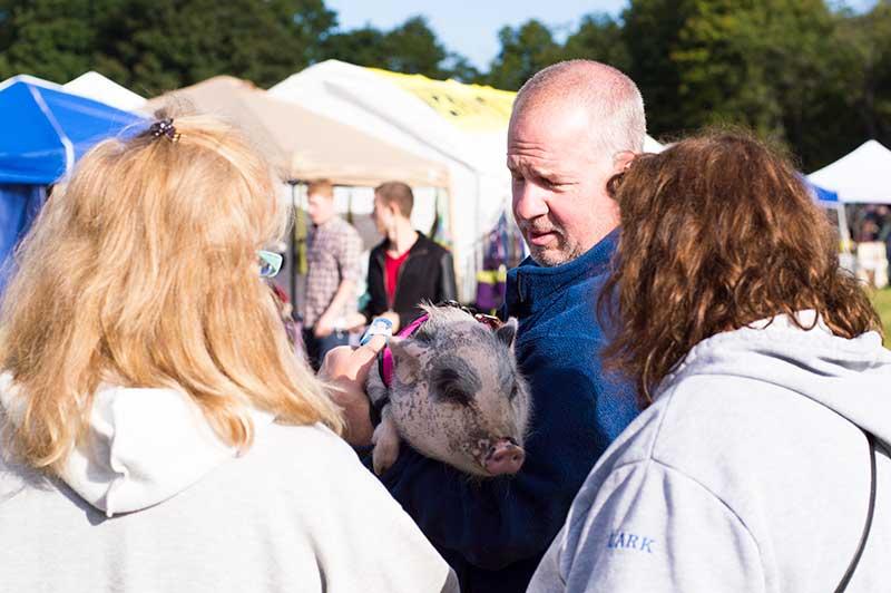 Piggy at the Harvest Market 2016